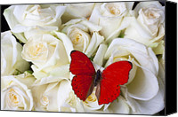Aesthetic Canvas Prints - Red butterfly on white roses Canvas Print by Garry Gay