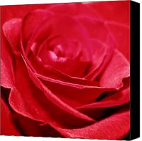 Northwest Art Photo Canvas Prints - Red Rose Canvas Print by Cathie Tyler