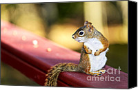 Outdoor Canvas Prints - Red squirrel on railing Canvas Print by Elena Elisseeva