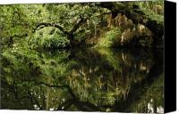 Florida State Canvas Prints - Reflection on Hillsborough River Canvas Print by Gregory Colvin