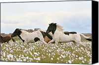 Wild Horse Canvas Prints - Running Horses Canvas Print by Gigja Einarsdottir