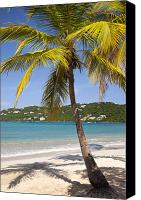 Turquois Canvas Prints - Saint Thomas Canvas Print by Brian Jannsen
