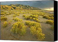 Sangre De Cristo Mountains Canvas Prints - Sangre De Cristo Mountains At Great Canvas Print by Tim Fitzharris