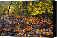 Wahkeena Creek Canvas Prints - Scattered About Canvas Print by Mike  Dawson