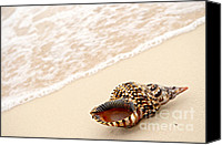 Conceptual Canvas Prints - Seashell and ocean wave Canvas Print by Elena Elisseeva