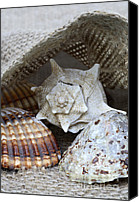 Coast Canvas Prints - Seashells Canvas Print by Frank Tschakert