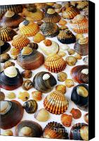 Fish Canvas Prints - Shell Background Canvas Print by Carlos Caetano