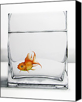 Goldfish Canvas Prints - Shiny Canvas Print by Christina Meeusen