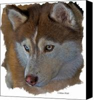 Dog Ceramics Canvas Prints - Siberian Husky Canvas Print by Larry Linton