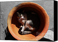 Pictures Of Cats Canvas Prints - Siesta 3 Canvas Print by Xueling Zou