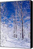 Winter Prints Canvas Prints - Snowy Path Canvas Print by Rob Travis