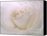 Flowers Photo Canvas Prints - Softness of a White Rose Flower Canvas Print by Jennie Marie Schell