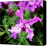 Northwest Art Canvas Prints - Spanish Lavender Canvas Print by Cathie Tyler