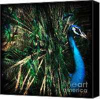 Zoo Canvas Prints - Splendour Canvas Print by Andrew Paranavitana