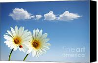 Heavens Canvas Prints - Spring Flowers Canvas Print by Carlos Caetano