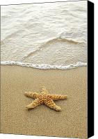Tropical Sunset Canvas Prints - Starfish on Beach Canvas Print by Mary Van de Ven - Printscapes