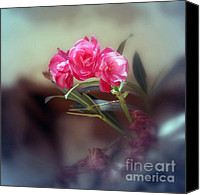 Flower Prints Greeting Cards Canvas Prints - Stillness Canvas Print by Eva Ason
