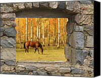 Autumn Photographs Canvas Prints - Stone Window View and Beautiful Horse Canvas Print by James Bo Insogna