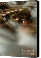 Screen Doors Canvas Prints - Stones in river Canvas Print by Odon Czintos