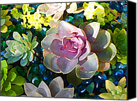Flora Canvas Prints - Succulent Pond 1 Canvas Print by Amy Vangsgard