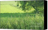 Rural Scenery Canvas Prints - Summer fields of green Canvas Print by Sandra Cunningham