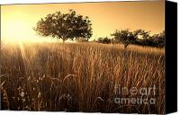 Northern California Photo Canvas Prints - Sun-Kissed California Meadow Canvas Print by Matt Tilghman