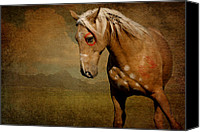 Wild Stallion Canvas Prints - Sundance Canvas Print by Lyndsey Warren
