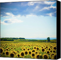 Cloud Glass Canvas Prints - Sunflowers Canvas Print by Kirstin Mckee