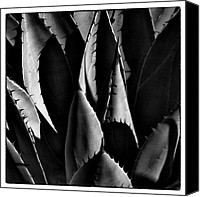 Albuquerque Canvas Prints - Sunlit Cactus Canvas Print by David Patterson