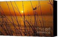 Backdrop Canvas Prints - Sunset Canvas Print by Carlos Caetano