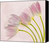 Pink Tulips Canvas Prints - Sweep Me Off My Feet Canvas Print by Rebecca Cozart