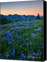 Aster Canvas Prints - Tatoosh Sunrise Canvas Print by Mike  Dawson