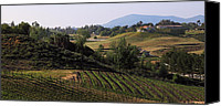 Bacchus Canvas Prints - Temecula vineyards Canvas Print by Viktor Savchenko