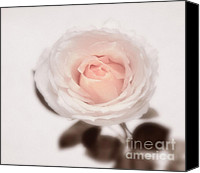 Roses Canvas Prints - Tender Canvas Print by Kristin Kreet