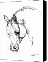 Arabian Horse Drawings Canvas Prints - The Arabian Horse Sketch Canvas Print by Angel  Tarantella