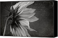 Monocromatico Canvas Prints - The Crossing  Canvas Print by Sharon Mau
