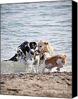 Carefree Canvas Prints - Three dogs playing on beach Canvas Print by Elena Elisseeva