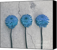 Crack Canvas Prints - Three flowers Canvas Print by Kristin Kreet