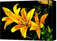 Amy Bradley Canvas Prints - Tiger Lily Canvas Print by Amy Bradley