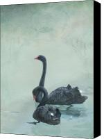 Blue Swan Canvas Prints - Together forever Canvas Print by Cindy Garber Iverson