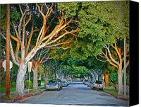 Signed Photo Canvas Prints - Tree Lined Street Canvas Print by Chuck Staley