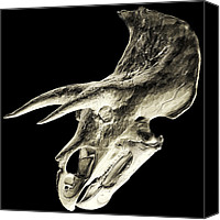 Scanned Canvas Prints - Triceratops Dinosaur Skull Canvas Print by Smithsonian Institute