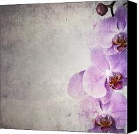 Parchment Canvas Prints - Vintage orchids Canvas Print by Jane Rix