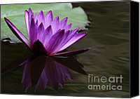 Florida Flowers Canvas Prints - Water Lily Reflected Canvas Print by Sabrina L Ryan