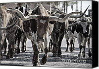 Worth Canvas Prints - Watercolor Longhorns Canvas Print by Joan Carroll