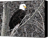 Eagles Canvas Prints - What was That Canvas Print by Don Mann