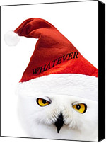 Xmas Canvas Prints - Whatever Canvas Print by Photodream Art