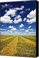 Hay Canvas Prints - Wheat farm field at harvest in Saskatchewan Canvas Print by Elena Elisseeva