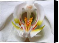 Close Up Canvas Prints - White Orchid Floral Canvas Print by Juergen Roth