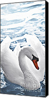 Blue Swan Canvas Prints - White swan on water Canvas Print by Elena Elisseeva